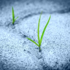 grass growing on sidewalk